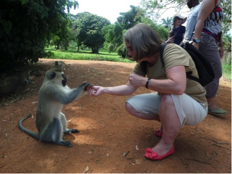 monkey feed 2